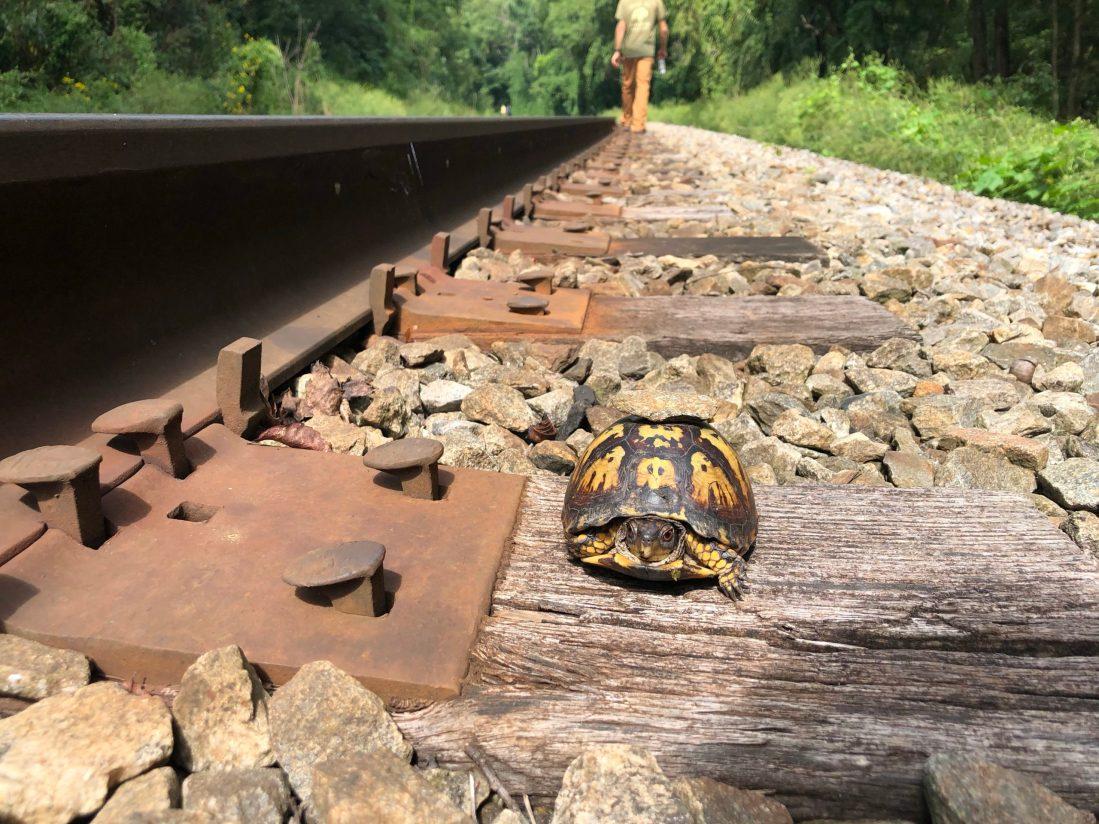 Turtle along train tracks