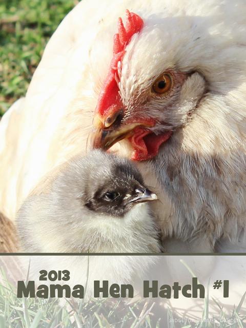 2013 Mama Hen title sized