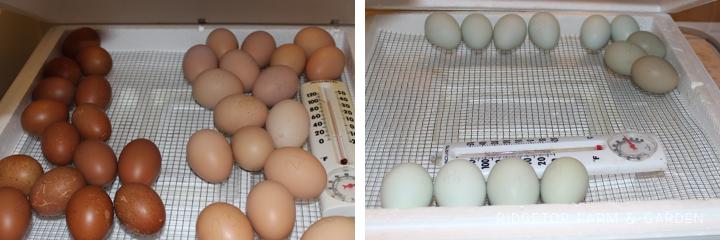 2014 Hatch4 incubator