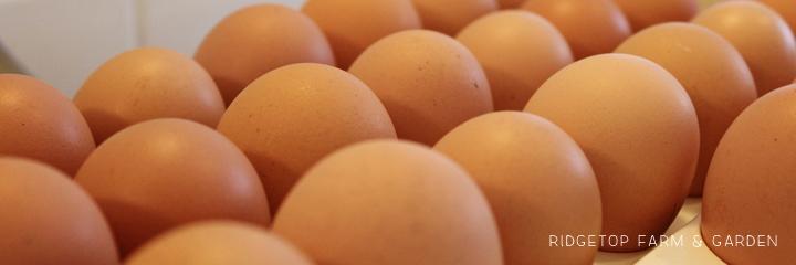2014 hatch3 RIR eggs