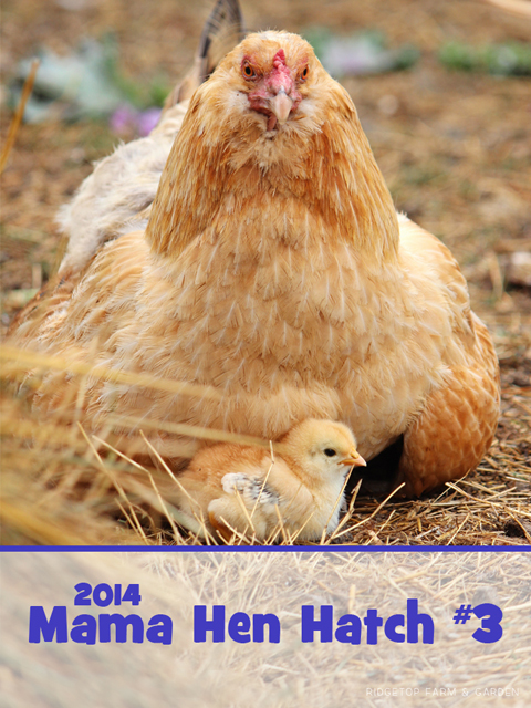 2014 mhatch mama3 title sized