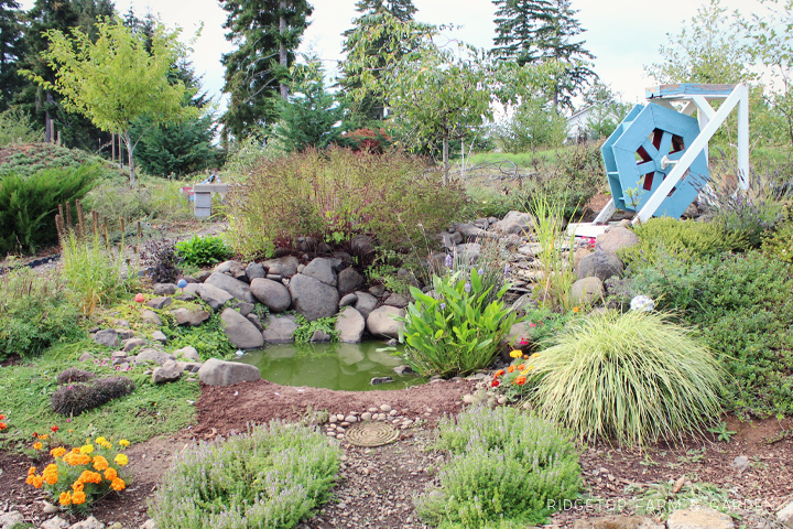 Front Pond Sept 2013