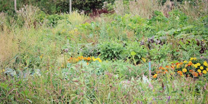 Garden Grows Aug2014 1