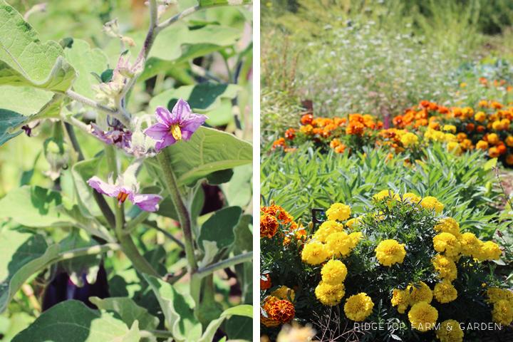 Garden Grows Aug2014 11