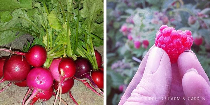 Garden Grows June2014 collect1