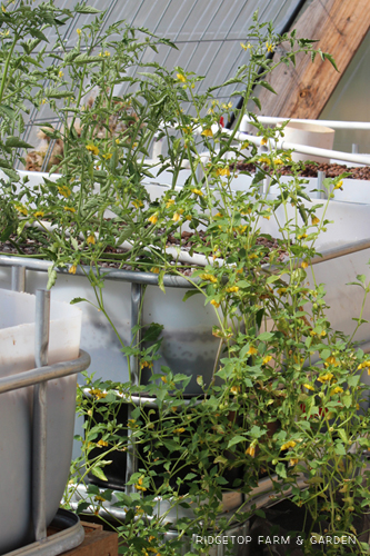 Garden Grows Sept2014 greenhouse1