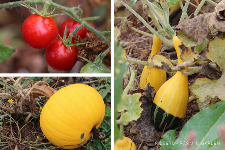 Garden Grows Sept2014 out1