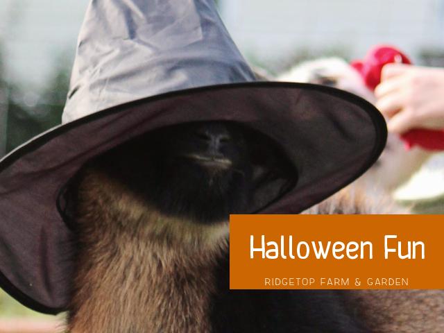 Halloween Fun title