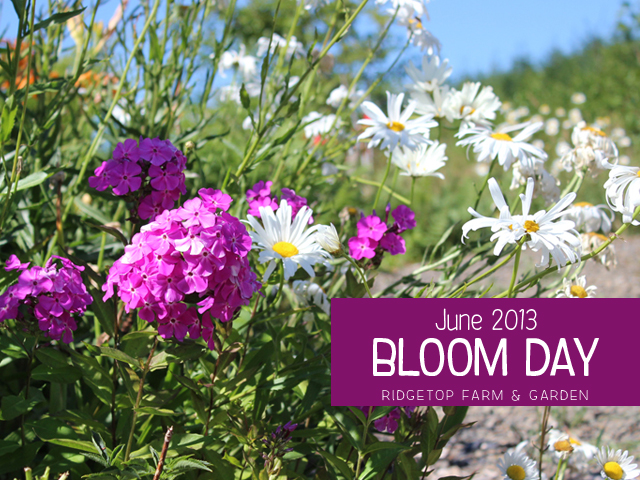 June2013 Bloom Day title