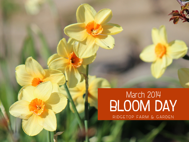 Mar 2014 Bloom Day title
