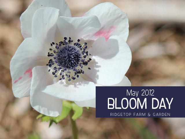May 2012 Bloom Day title