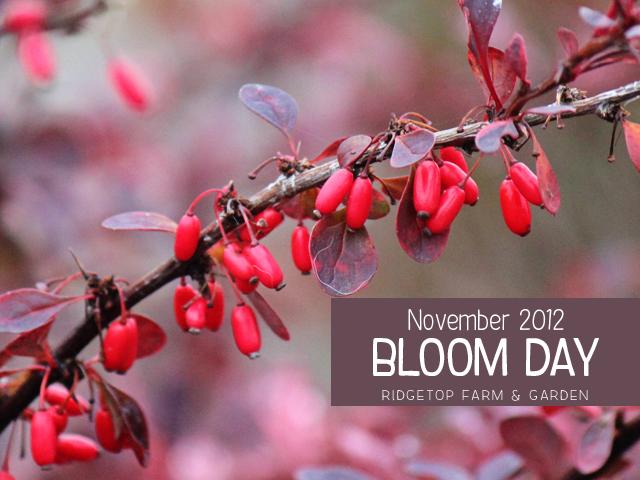 Nov 2012 Bloom Day title