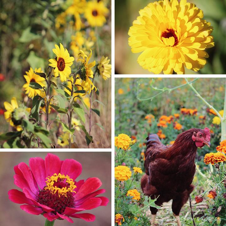 Oct 2014 Bloom Day garden
