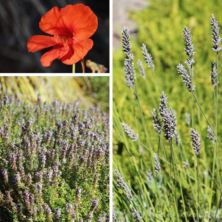 Sept 2014 Bloom Day pond1