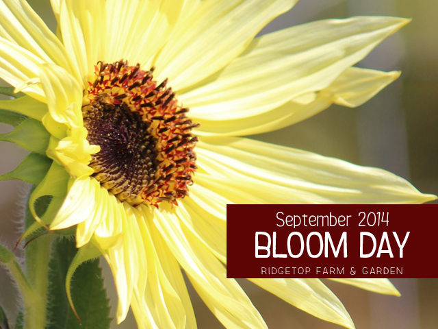 Sept 2014 Bloom Day title