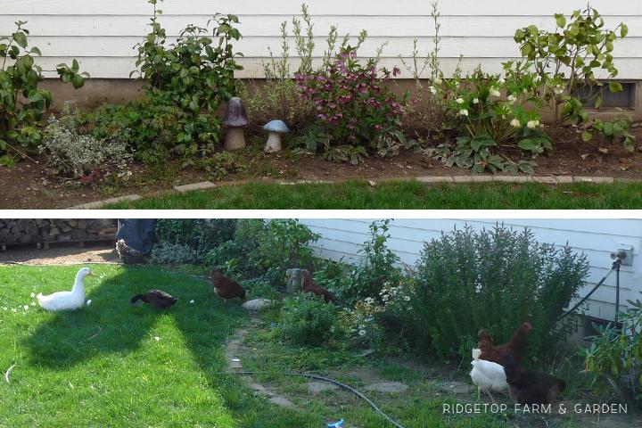 Shade Garden 2011