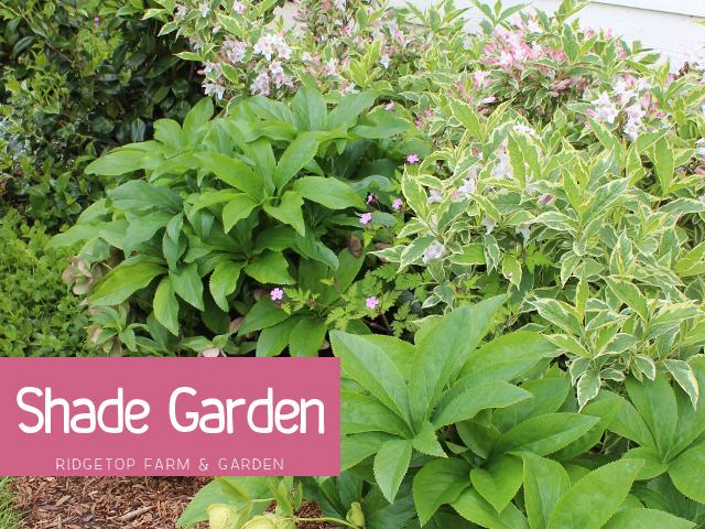 Shade Garden title