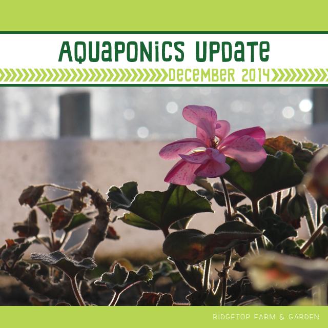 Aquaponics Update Dec2014 title