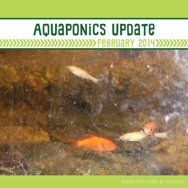 Aquaponics Update Feb2014 title