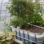 Aquaponics Update – March 2015