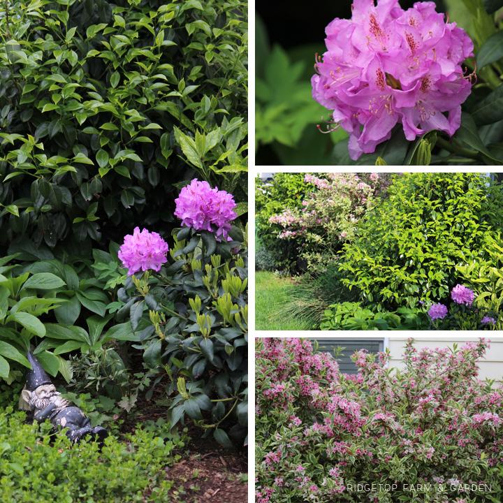 May 2015 Bloom Day shade