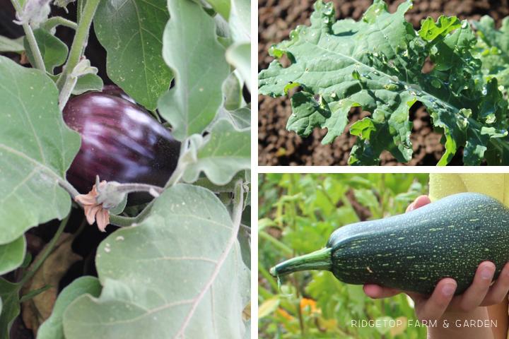 Garden Grows July2015 1