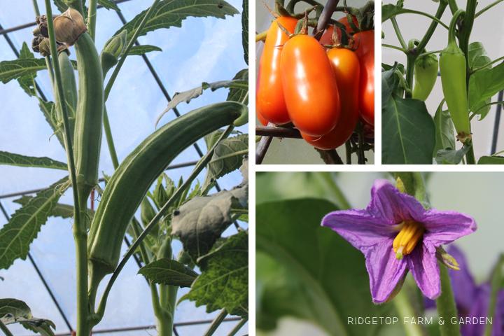 Garden Grows July2015 greenhouse