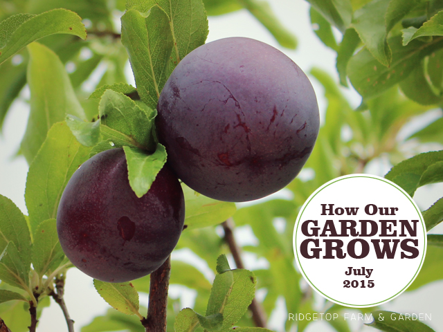 Garden Grows July2015 title