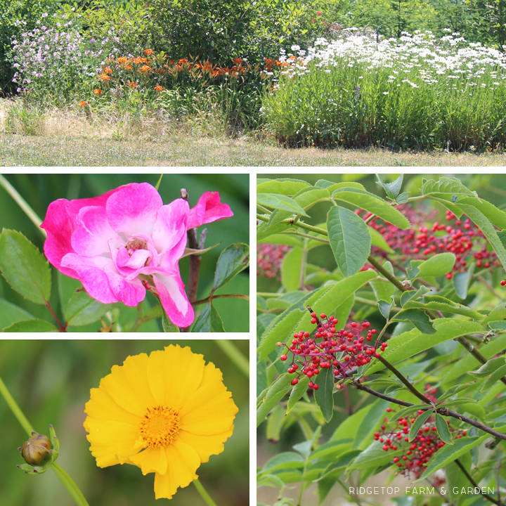 Ridgetop Farm & Garden | Bloom Day | July 2015 | Back Yard