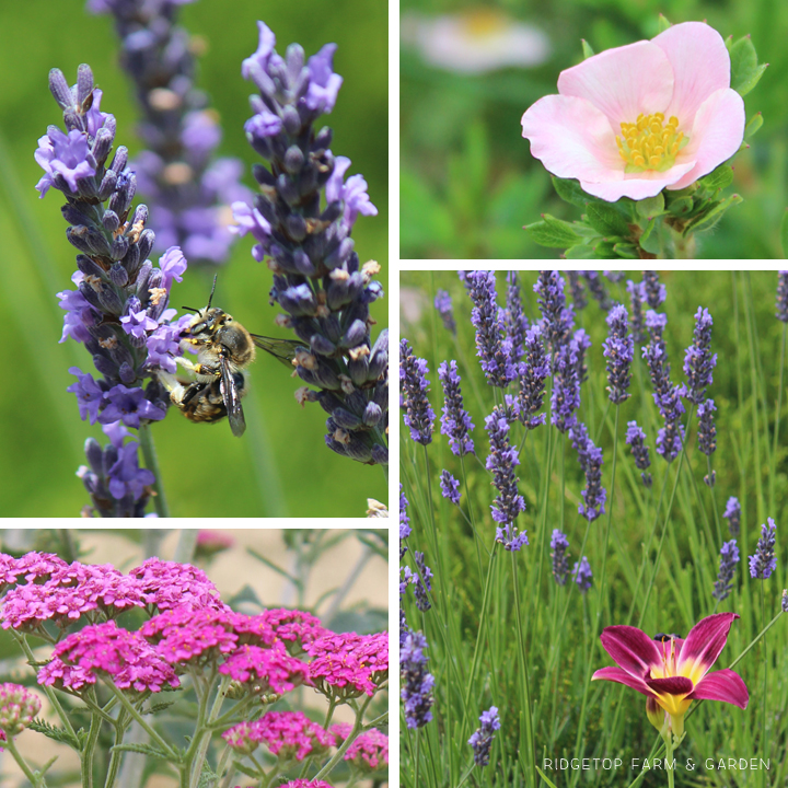 Ridgetop Farm & Garden | Bloom Day | July 2015 | Front Yard Pond