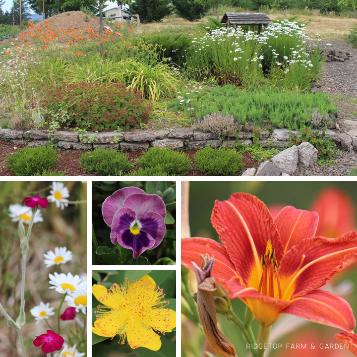 Ridgetop Farm & Garden | Bloom Day | July 2015 |Front Yard
