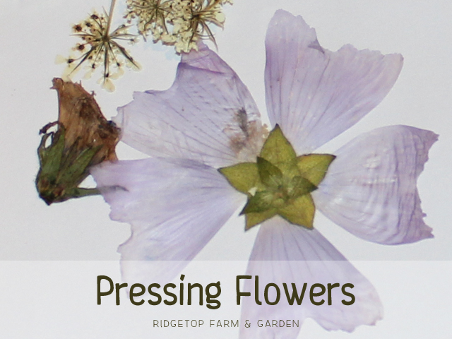 Ridgetop Farm & Garden | Pressing Flowers