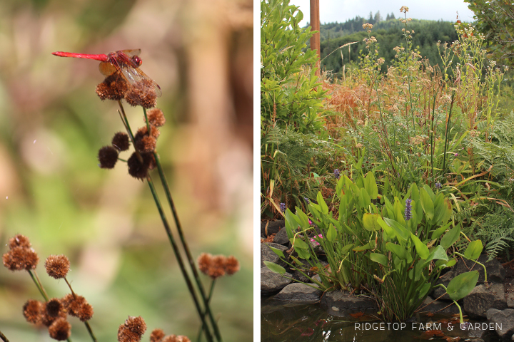 Bloom Day Aug2015 bird village3