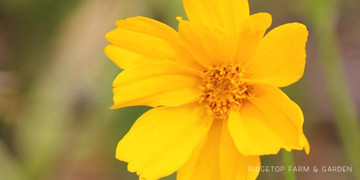 BloomDay-Sept2015_3