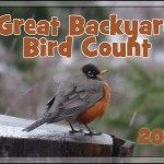 2011 Great Backyard Bird Count