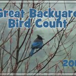 2012 Great Backyard Bird Count