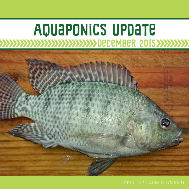 Aquaponics Dec2015 - title