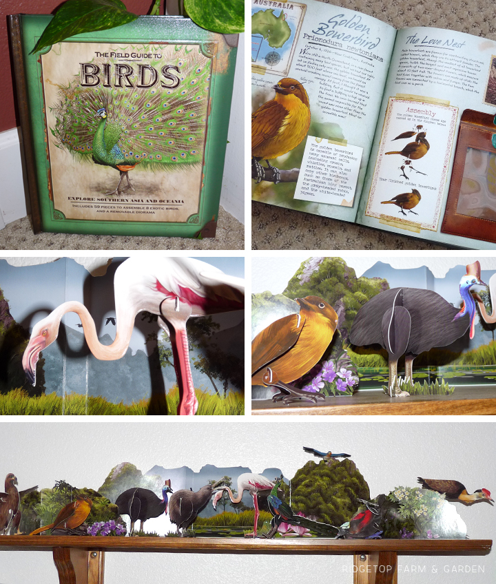 Ridgetop Farm and Garden | Home School | Animal Studies | Bird Display