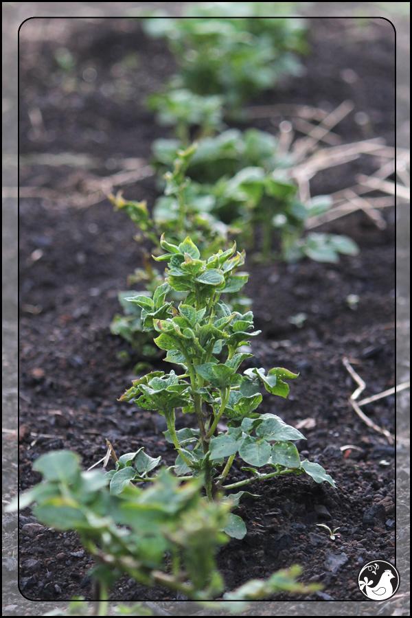 Ridgetop Farm and Garden | June 2014 Update