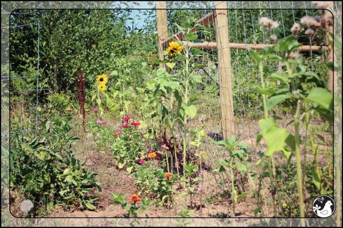 Ridgetop Farm and Garden | August 2014
