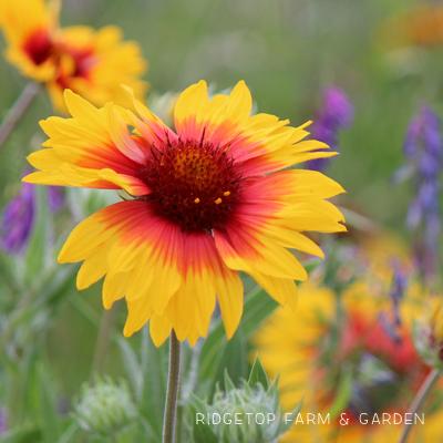 Bloom Day – June 2016