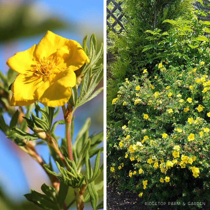Ridgetop Farm and Garden | Bloom Day | July 2016