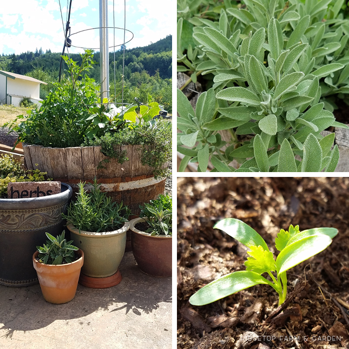 Ridgetop Farm and Garden | Garden Grows | July 2016