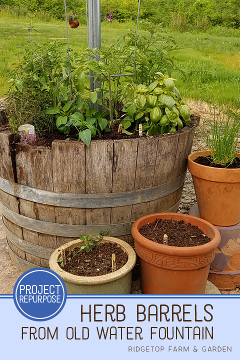 Ridgetop Farm and Garden | Project Repurpose | Herb Barrel from Water Fountain