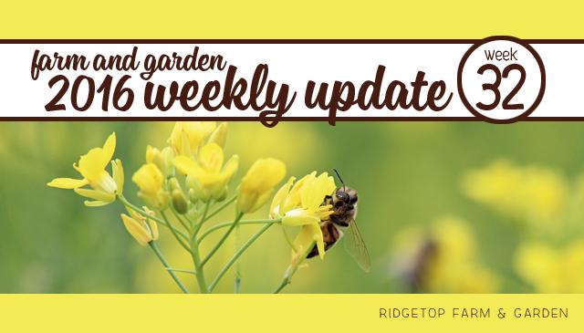 Ridgetop Farm and Garden | 2016 Update | Week 32
