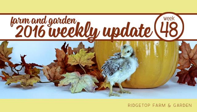 Ridgetop Farm and Garden | 2016 Update | Week 48