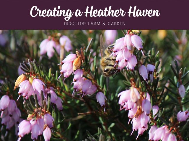 Ridgetop Farm and Garden | Heather