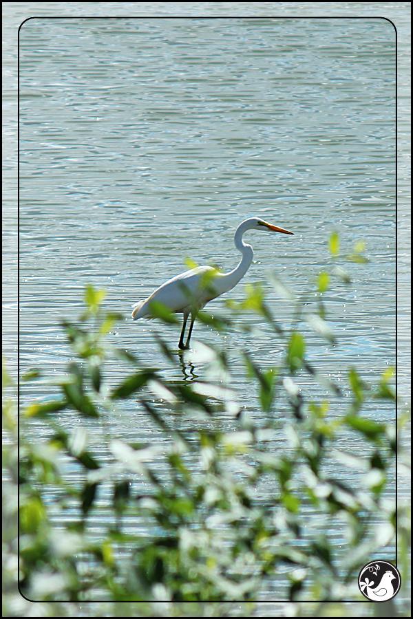 Ridgetop Farm and Garden   Birds of 2013   Week 36