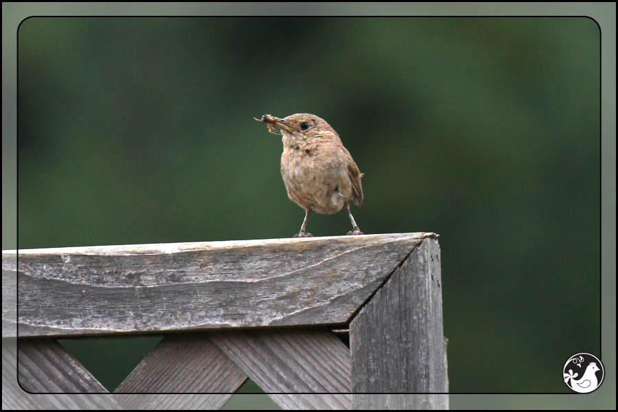 Ridgetop Farm and Garden | Birds of 2013 | Week 34