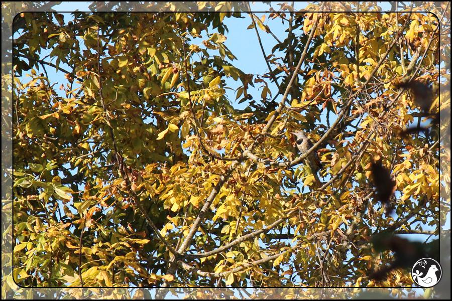 Ridgetop Farm and Garden   Birds of 2013   Week 43